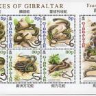 Snakes of Gibraltar
