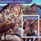 Prehistoric Wildlife of Gibraltar
