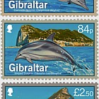 Dolphins of Gibraltar - CTO