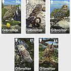Chouettes de Gibraltar