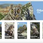 PRE-ORDER Gibraltar Owls