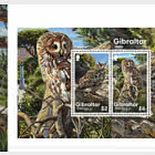 Gibraltar Owls