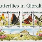 Butterflies in Gibraltar