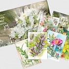Flowering Herbs of the Greek earth (Set of 6)