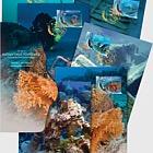 Diving Tourism - Shipwrecks of the classical period