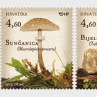 Mushrooms 2013