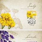 Croatian Flora