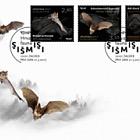Croatian Fauna- Bats