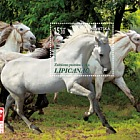 Protected Horse Breeds - Lipizzan