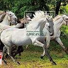 Razas de Caballos Protegidas - Lipizzan