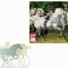 Protected Horse Breeds - Lipizzan - (FDC with Zagreb Cancellation)