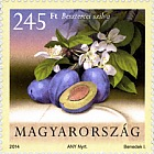 Cultivated Flora of Hungary - Fruit