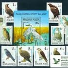 Thematic Stamp Sets- Raptors