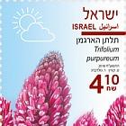 Spring Flowers - (Trifolium Purpureum)