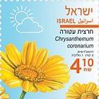 Spring Flowers - (Chrysanthemum Coronarium)
