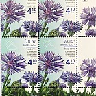 Spring Flowers - (Centaurea Cyanoides) - Tab Block