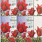 Spring Flowers - (Tulipa Agenensis) - Tab Block
