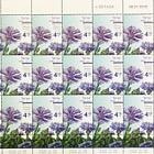 Spring Flowers - (Centaurea Cyanoides) - Sheet