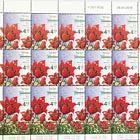 Spring Flowers - (Tulipa Agenensis) - Sheet