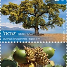 Trees of Israel