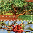 Trees of Israel - Arbutus Andrachne
