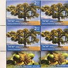 Trees of Israel - Quercus Ithaburensis - Tab Block