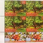 Trees of Israel - Arbutus Andrachne - Tab Block