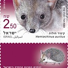 Endangered Mammals in Israel - Long-Eared Hedgehog