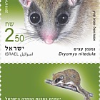 Endangered Mammals in Israel - Forest Doormouse