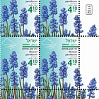 Autumn Flowers - Muscari Parviflorum - Tab Block