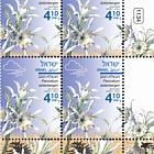 Autumn Flowers - Pancratium Sickenbergeri - Tab Block