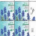 Autumn Flowers - Muscari Parviflorum - Plate Block