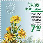 Summer Flowers - Dittrichia Viscosa