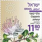 Summer Flowers - Capparis Zoharyi
