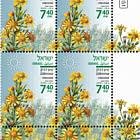 Summer Flowers - Dittrichia Viscosa - Tab Block
