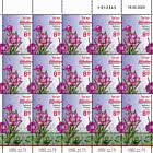 Summer Flowers - Epilobium Hirsutum - Sheet