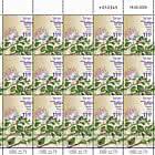 Summer Flowers - Capparis Zoharyi - Sheet