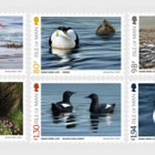 Coastal Birds of the Isle of Man by Jeremy Paul