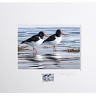 Coastal Birds by Jeremy Paul - (Stamped & Signed Fulmar Print)