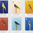 Show Birds - Mint