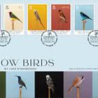 Show Birds