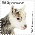 The Young of Iceland's Domestic Animals