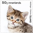 The Young of Iceland's Domestic Animals- (Kitten)