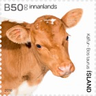 The Young of Iceland's Domestic Animals II - (Calves)