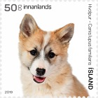 The Young of Iceland's Domestic Animals III - Puppy