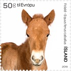 The Young of Iceland's Domestic Animals III - Foal