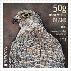 Europa 2019 - Icelandic Birds - Gyrfalcon