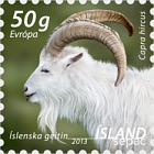 SEPAC - The Icelandic Settlement Goat
