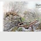 Durrell & Darwin - 25 Years of the Darwin Initiative (PP-MS)