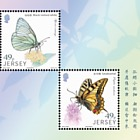 Links with China – Butterflies